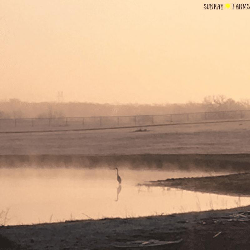 Simple Foggy Morning at Sunray Farms